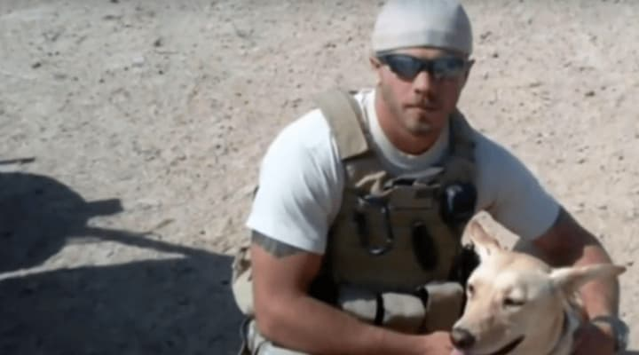 How A Veteran Can Make Their Dog A Service Dog