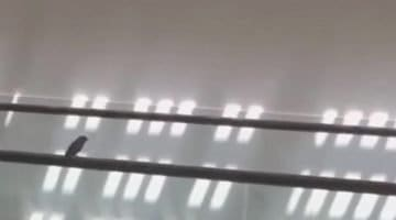 Tiny Bird On Escalator
