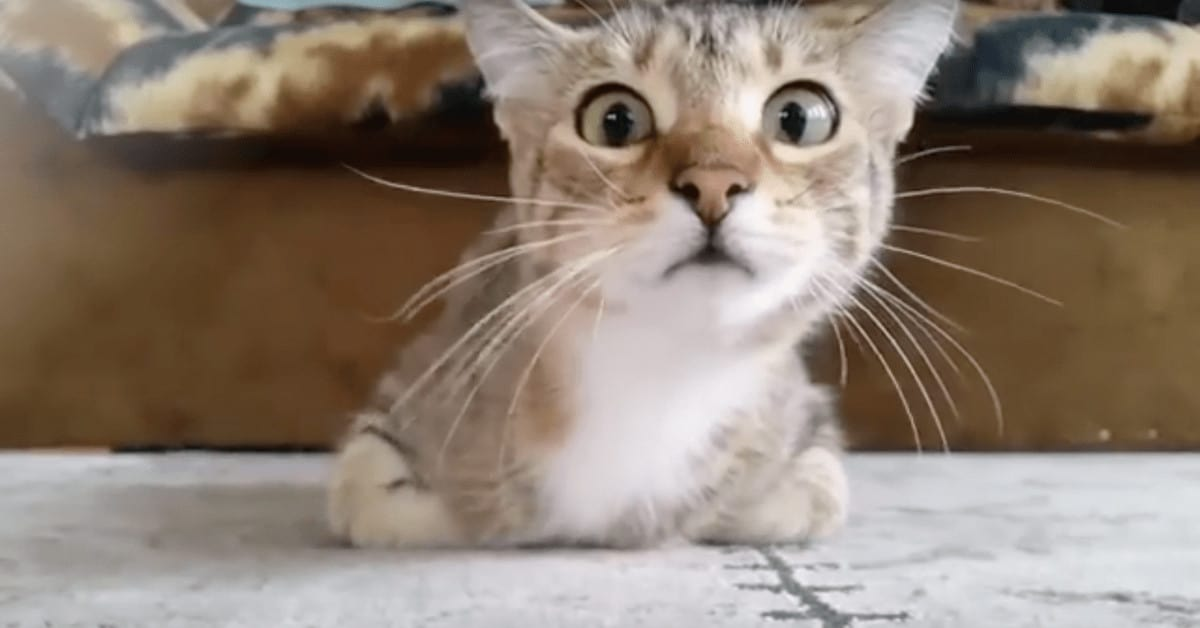 this kitten loves watching movies  but when the scary part