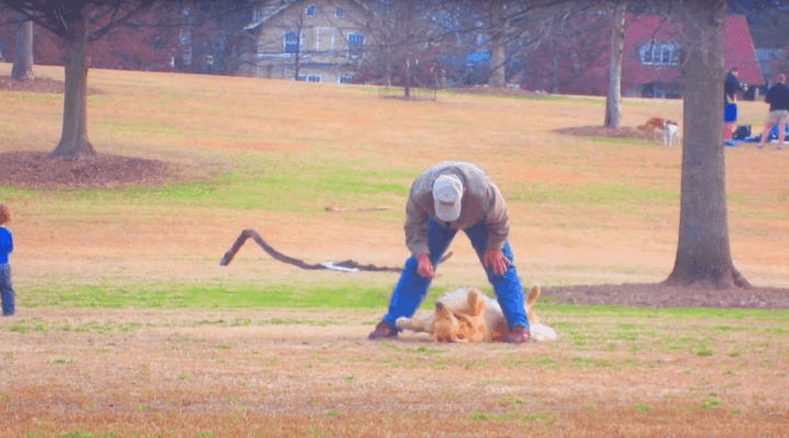 Dog Not Wanting To Leave Dog Park