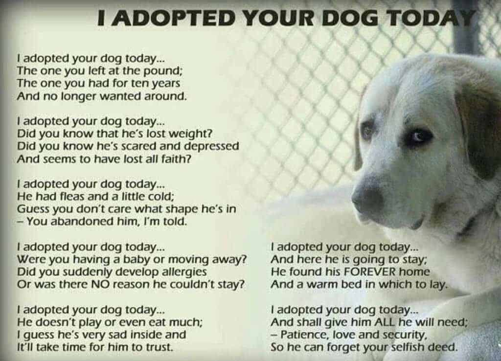 Dogs Adopted Left Behind