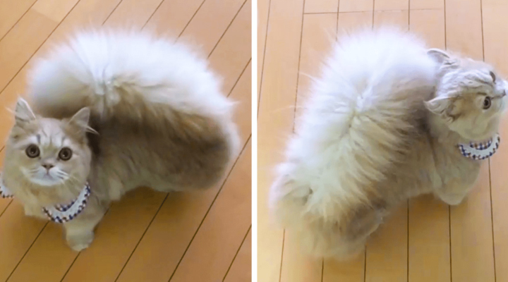 This Kitty Is Going Viral For Her Squirrel-Like Tail