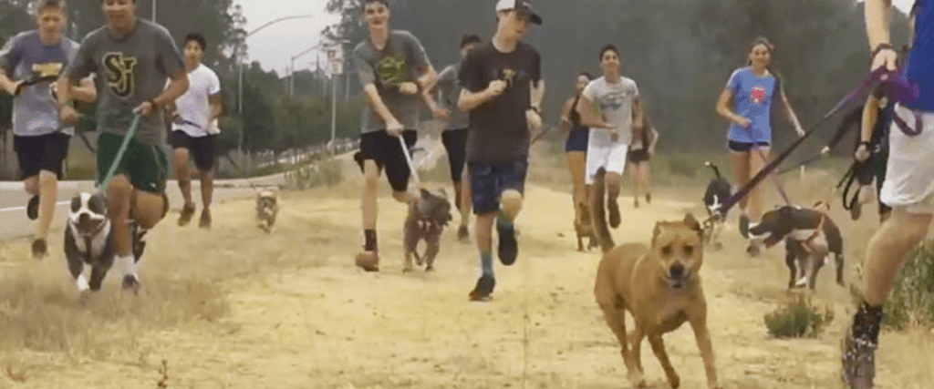 cross country dogs