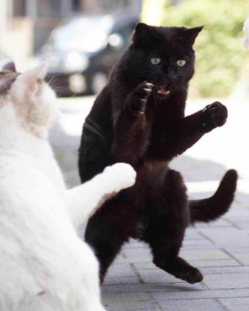 Photographer Secretly Captures Cats Being Ninjas And The