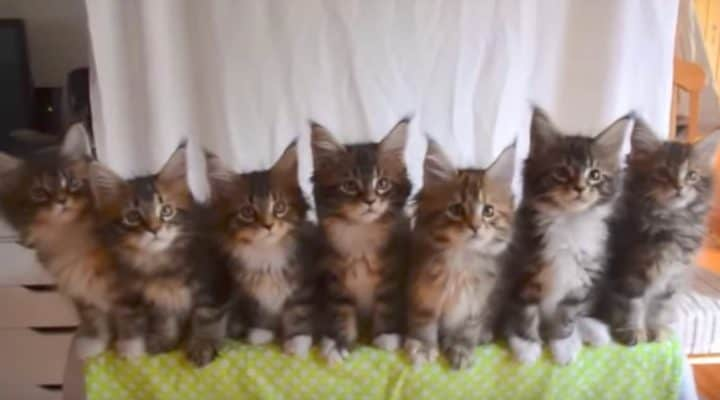 Kittens Join Little Dance Troop And Perform Adorable Routine