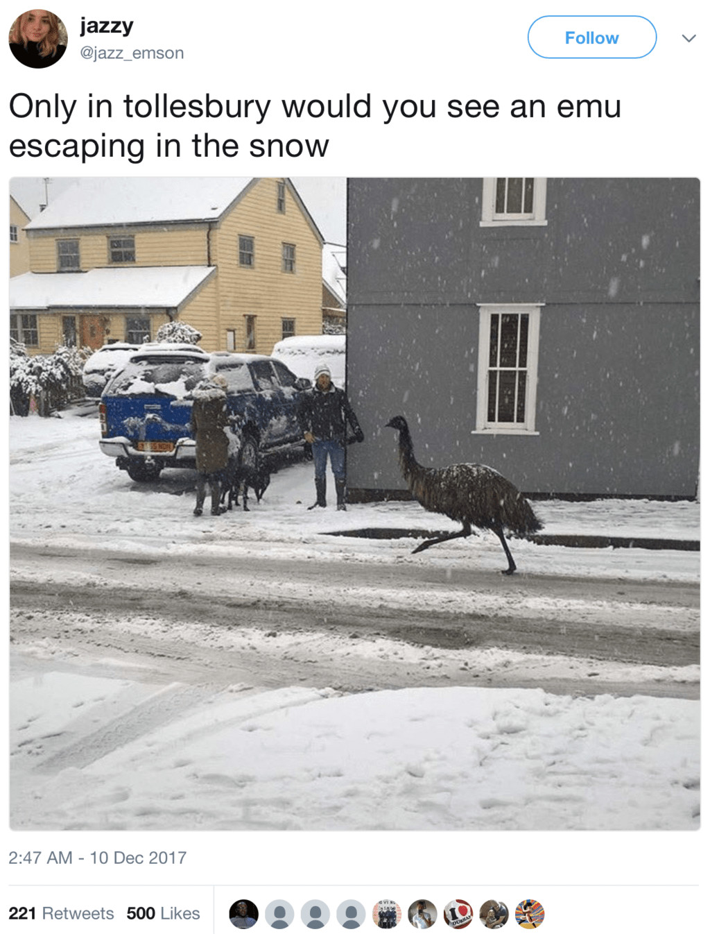 escaped emu