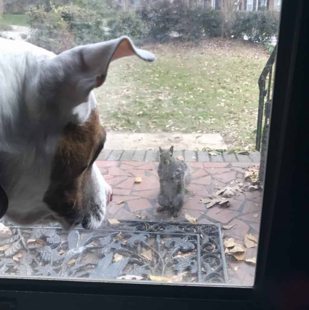 Squirrel Taps Window Every Day Years On The Family Realises - Cat squirrel playing cutest thing youll see day