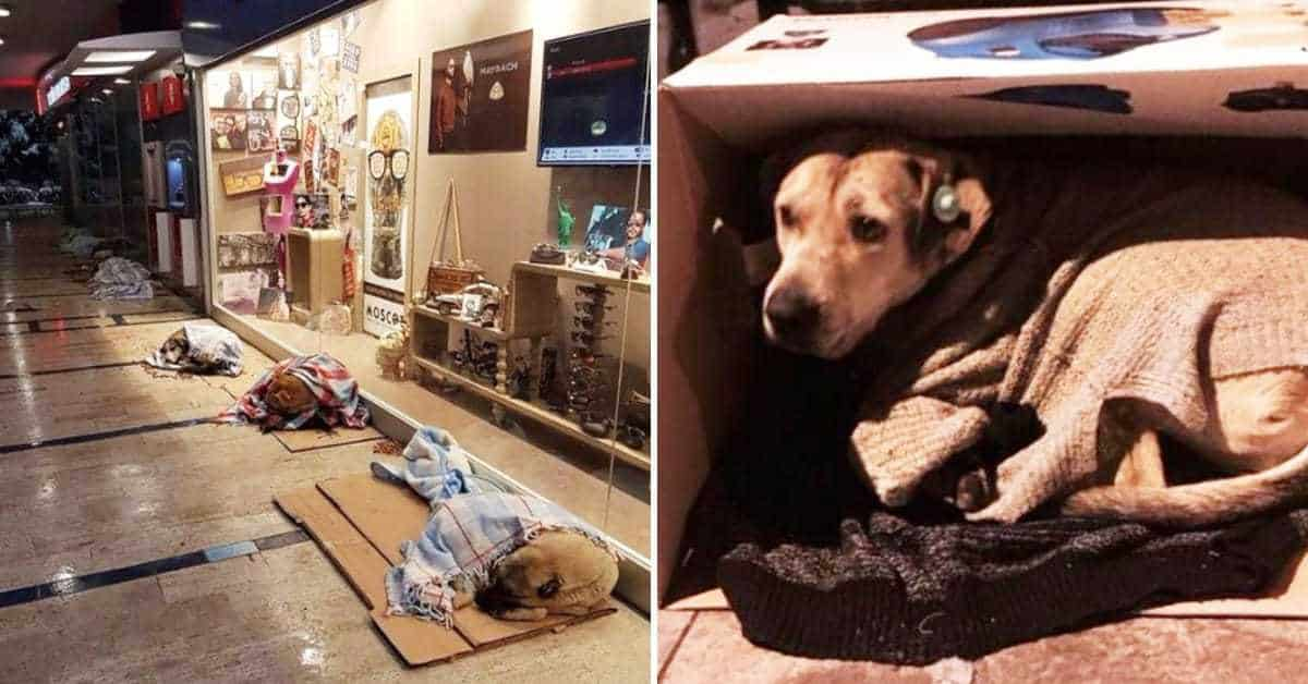Freezing Dogs Take Shelter At The Mall, Shop Owner Spots Them And Takes Matters Into His Own Hands