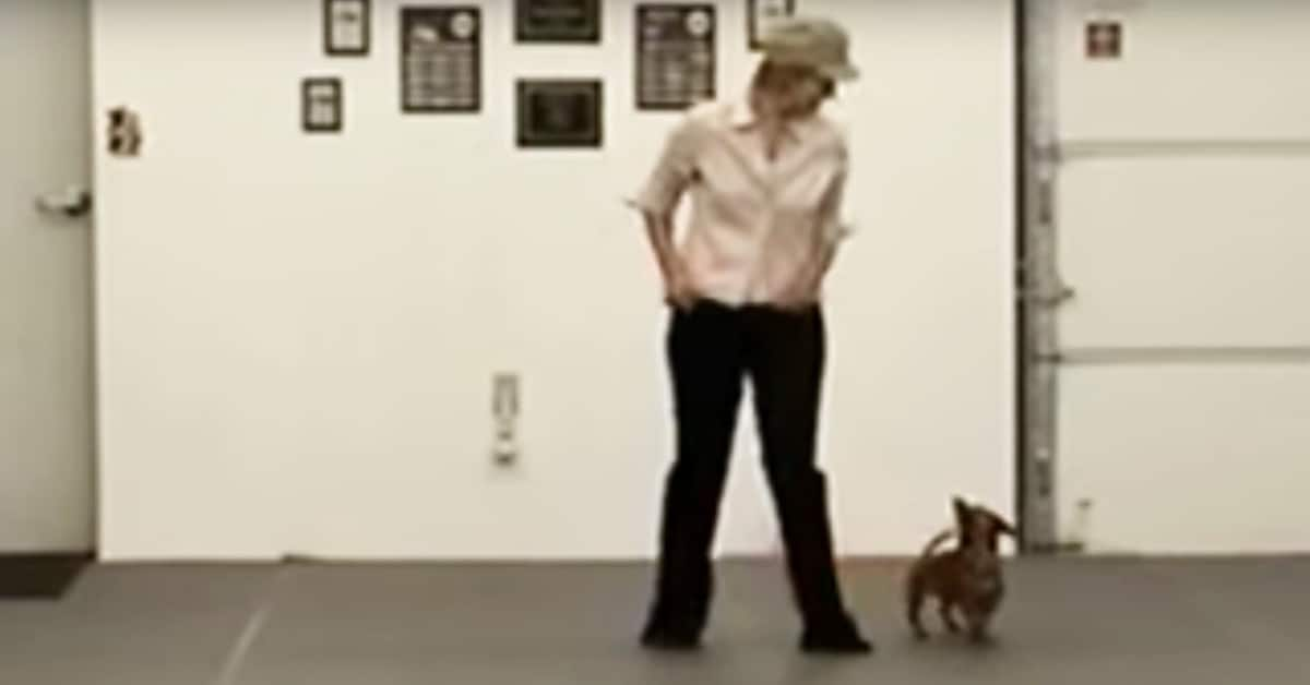 Woman Stands With Tiny Dachshund, When the Music Starts Keep Your Eyes Firmly On The Dog