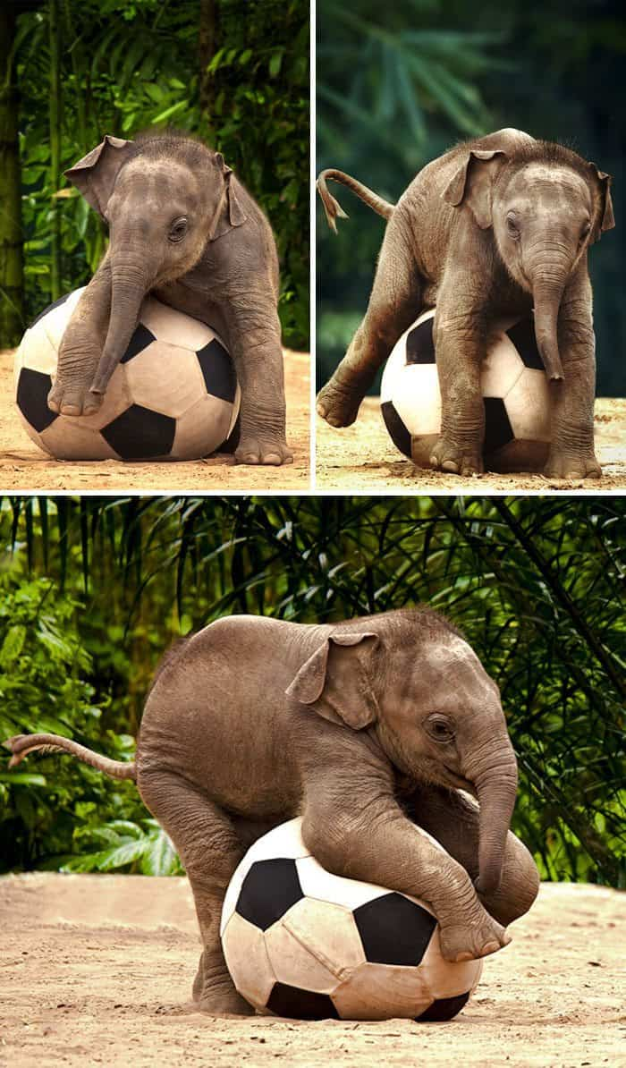 These 16 Photos Of Adorable Baby Elephants Are Guaranteed ...