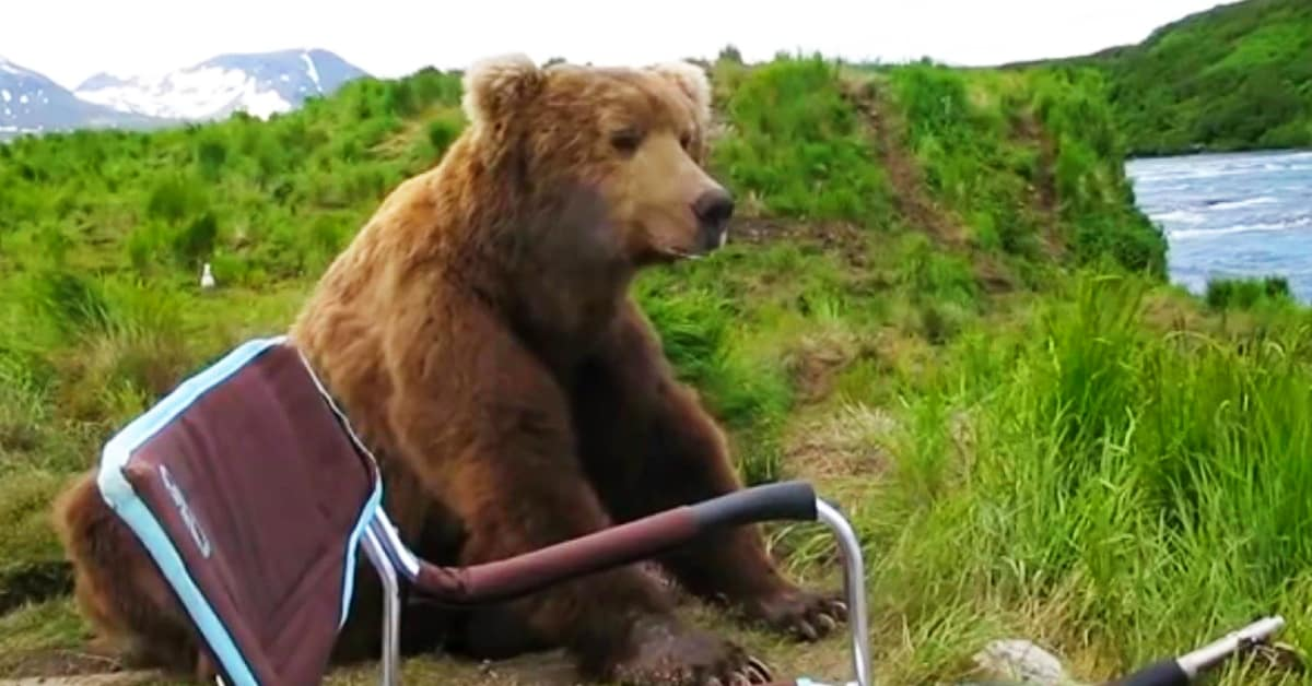 bear sits next to man