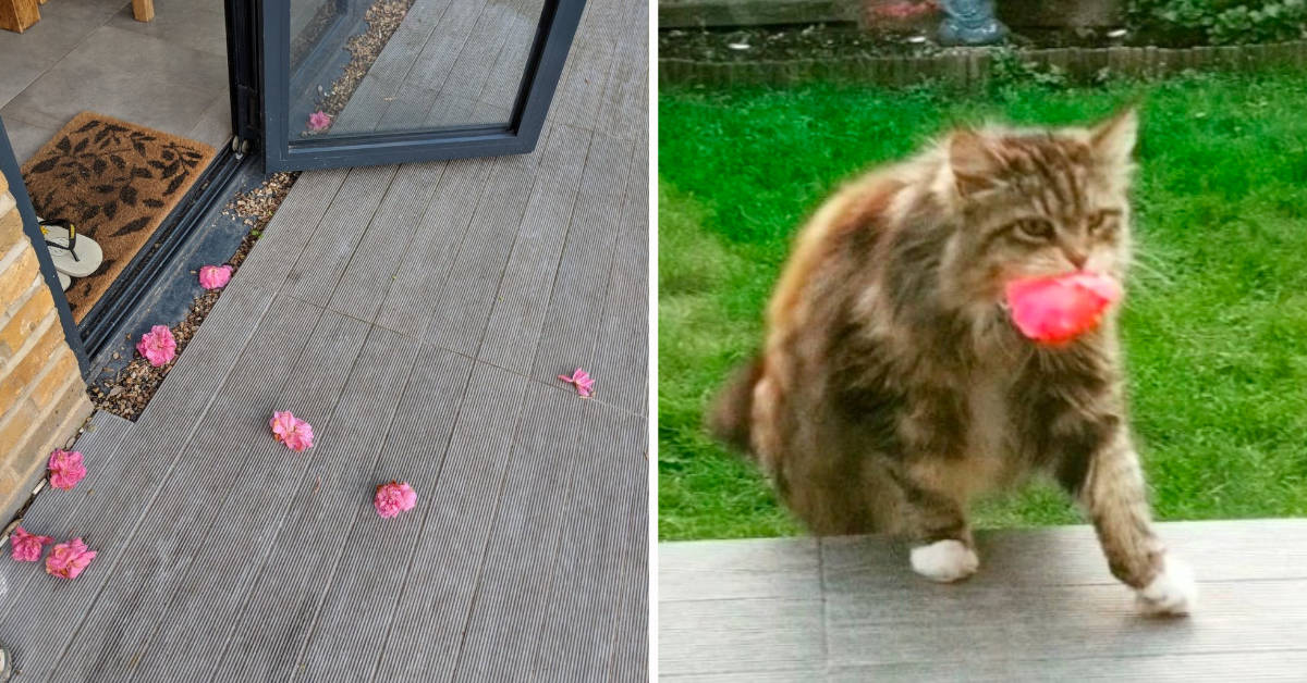 Feline secret admirer leaves flowers on womans porch every day mightylinksfo