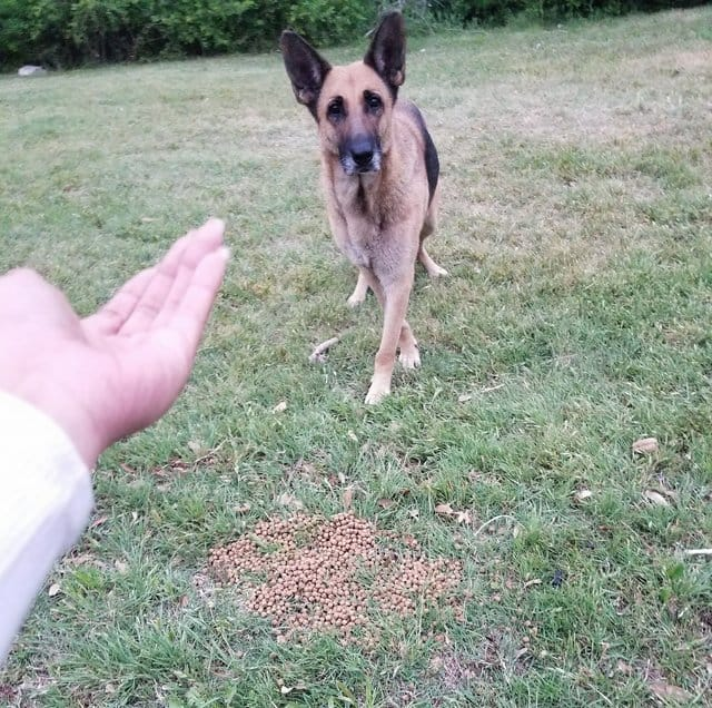 german shepherd reveals her secret