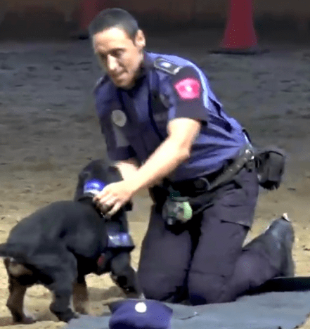 police dog gives cpr