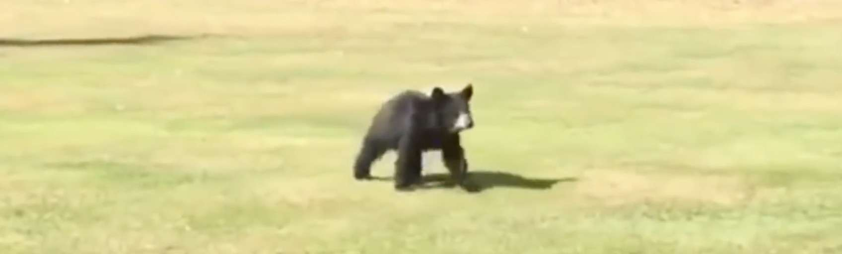 bear hug on a golf course