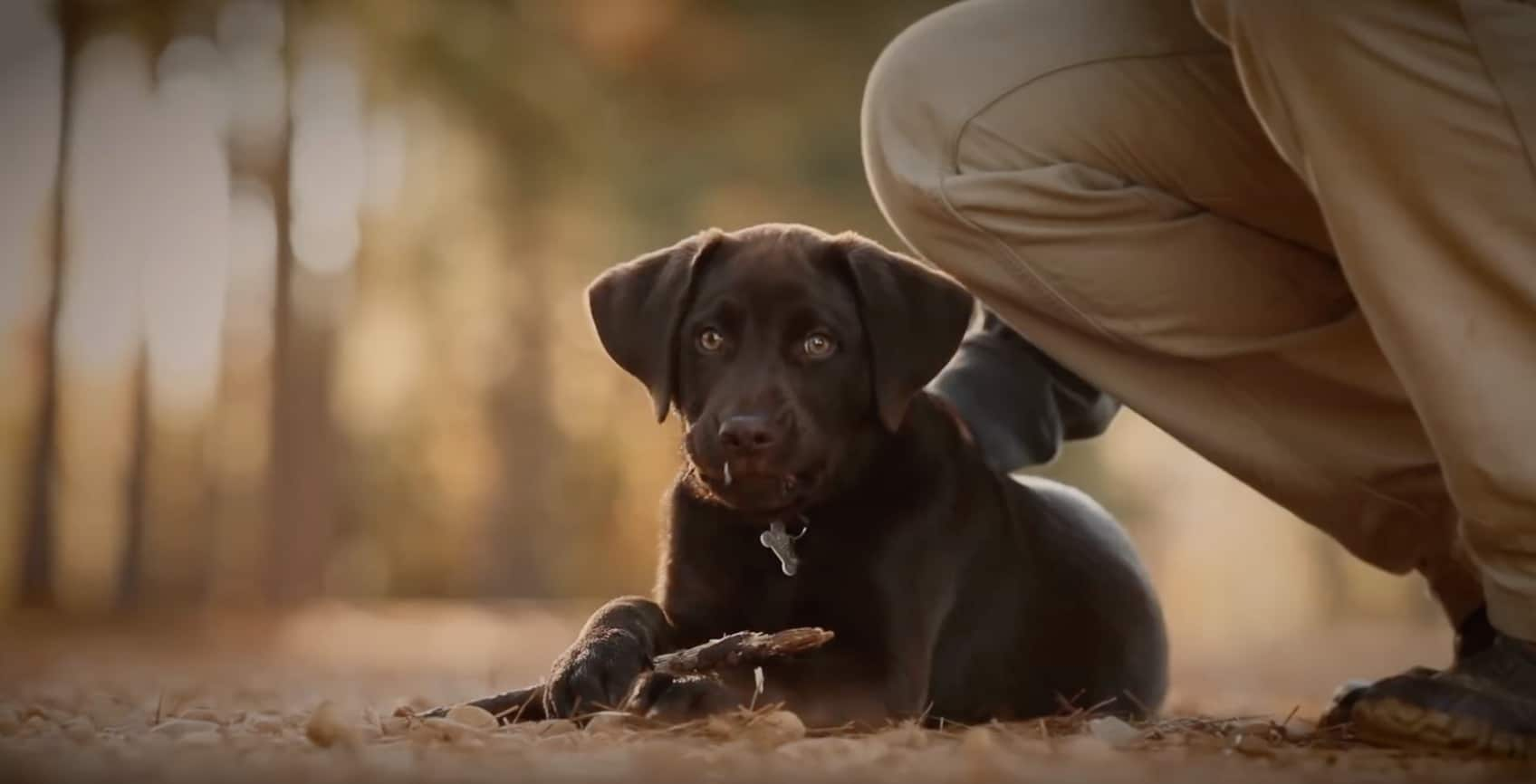The Circle is a beautifully emotional short film about the bond between a man and his dog.