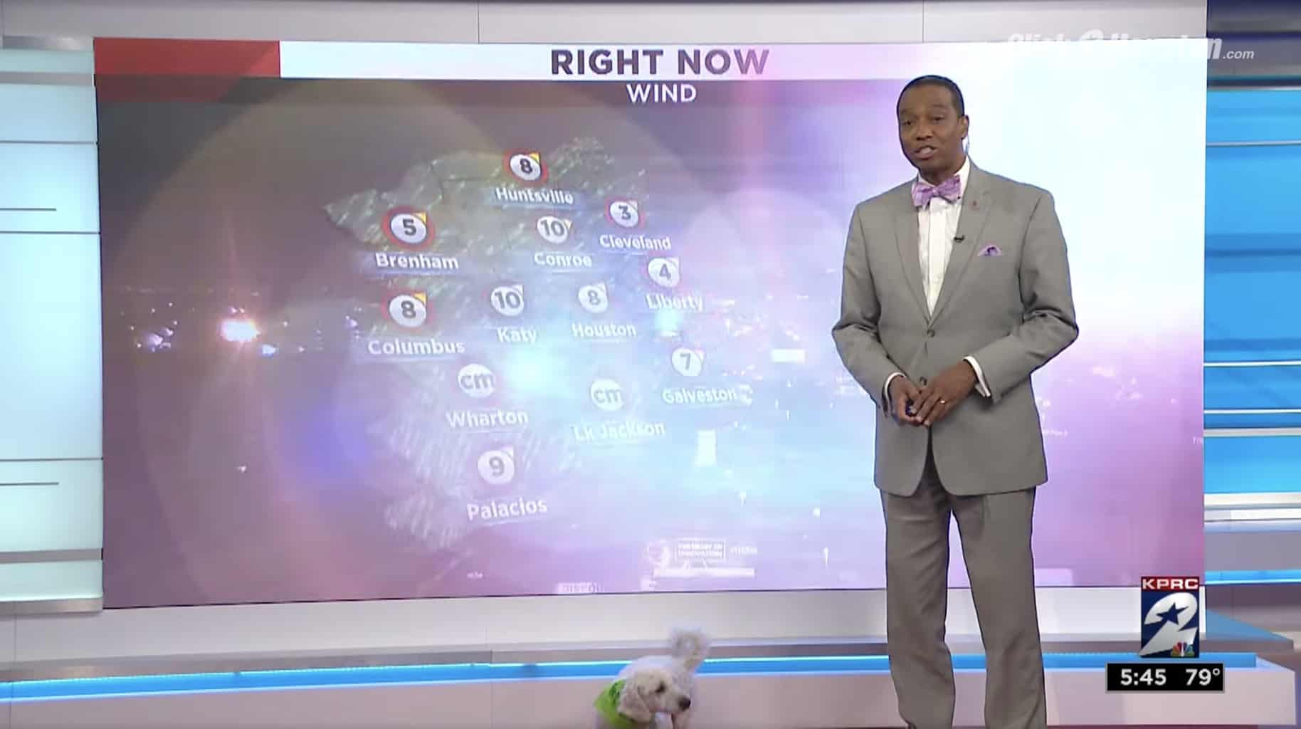 dog gatecrashes the weather forecast