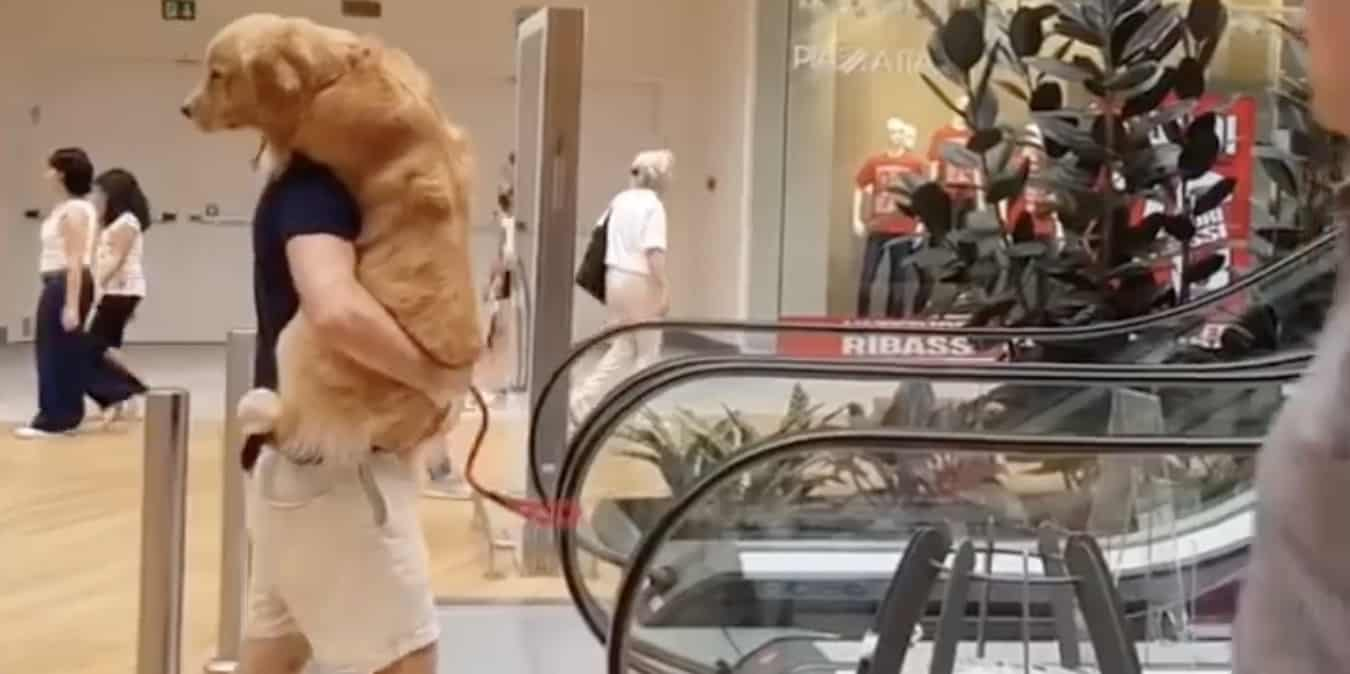 man carries his dog up an escalator