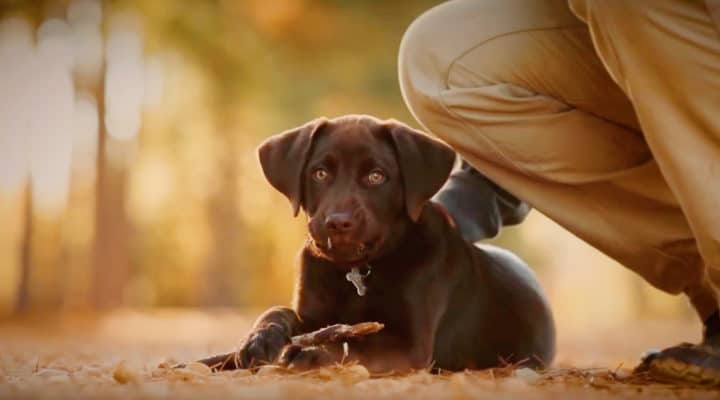 A Man And His Dog >> A Tale Of One Man And His Dog Will Get You Running For The Tissues