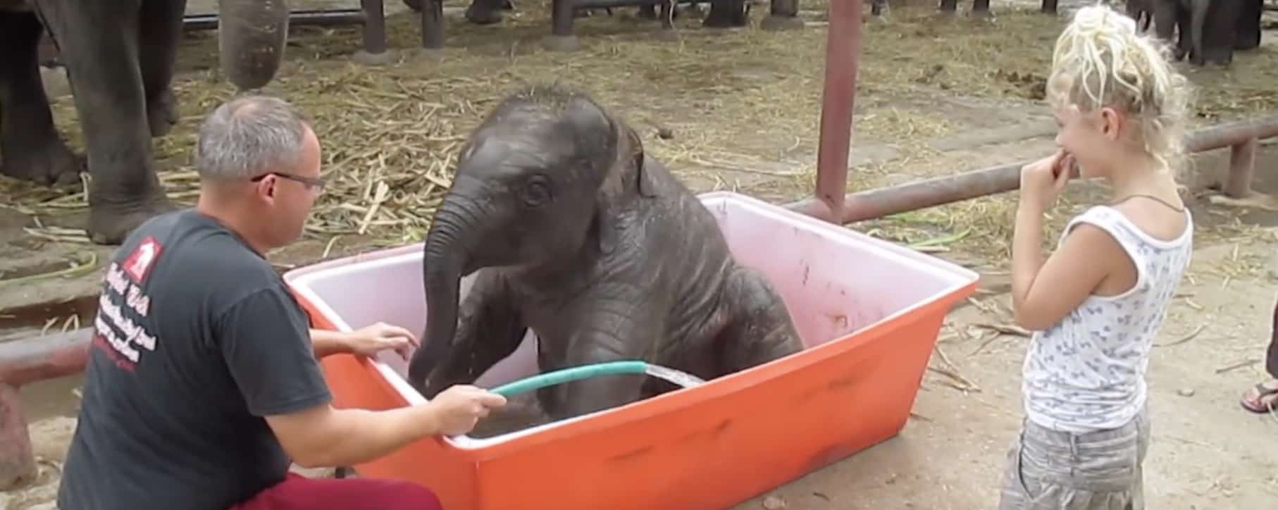 baby elephant's bath time