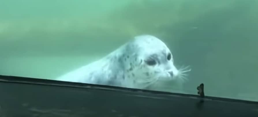 seal meets a butterfly for the first time