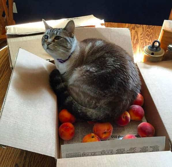 cat loves peaches