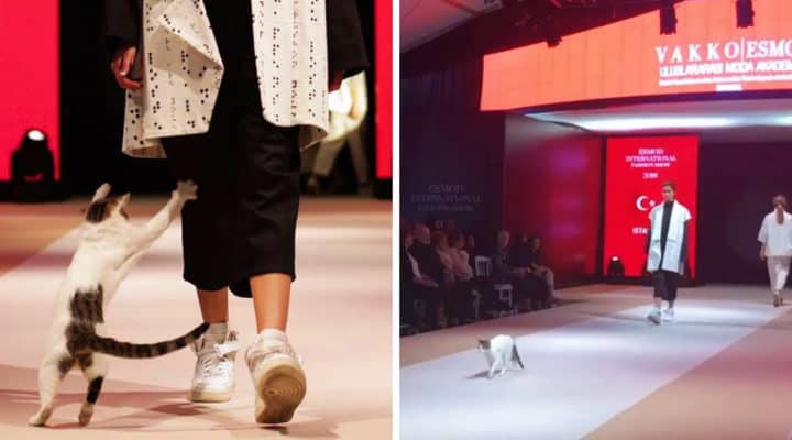 f3c762de16 Cat on the catwalk becomes a showstopper at an Istanbul fashion show