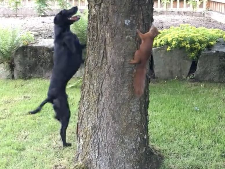 dog chase a squirrel