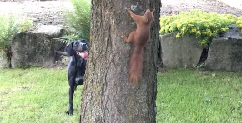 Watching This Dog Chase A Squirrel Was Like Something Out Of A Cartoon