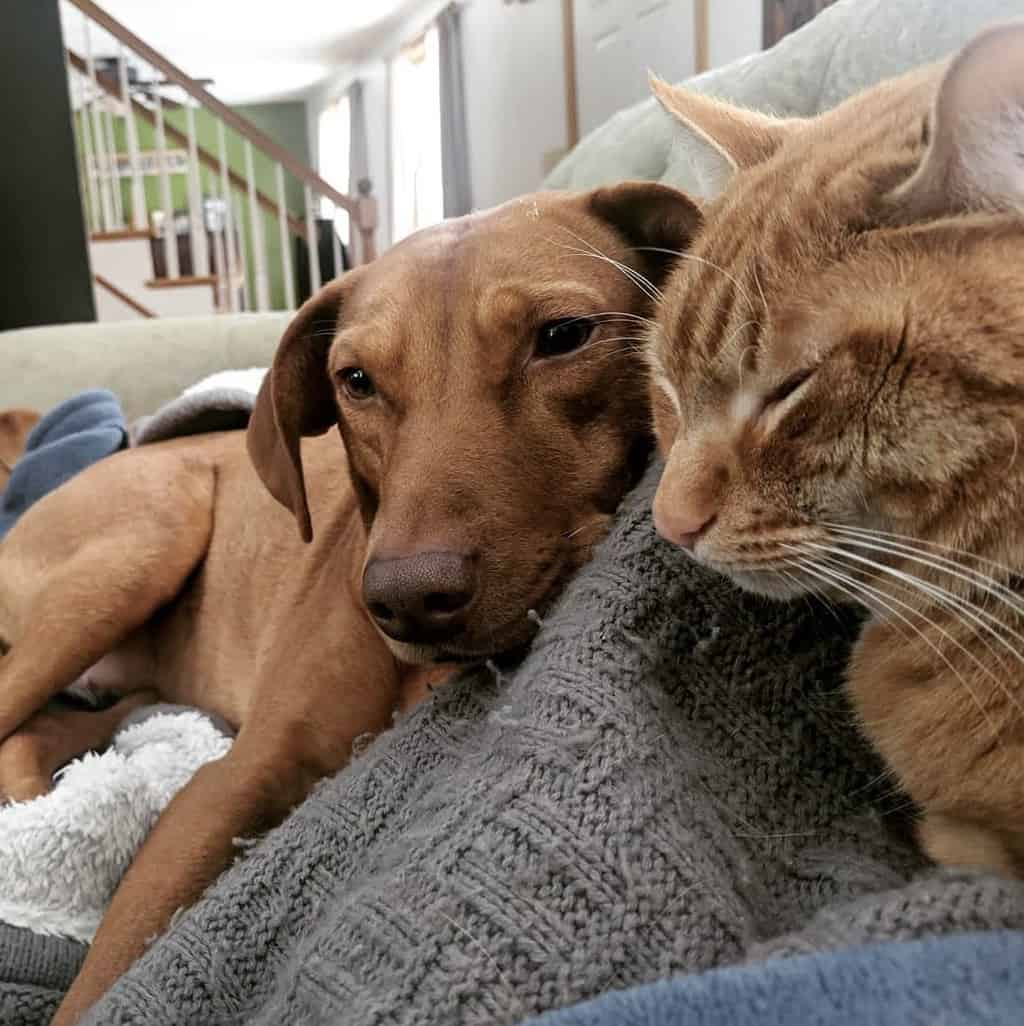 cat comforting anxious dog with mom on couch