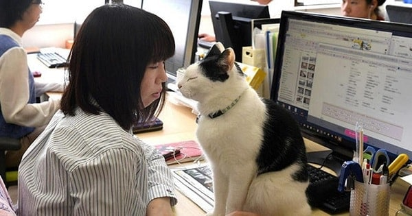 Employees bring cats to work