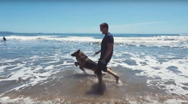 Dog chained up sees the sea for first time