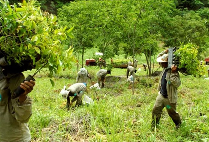 Forest replanted by couple