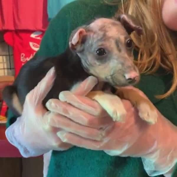 Burned puppy saved by rescue teams