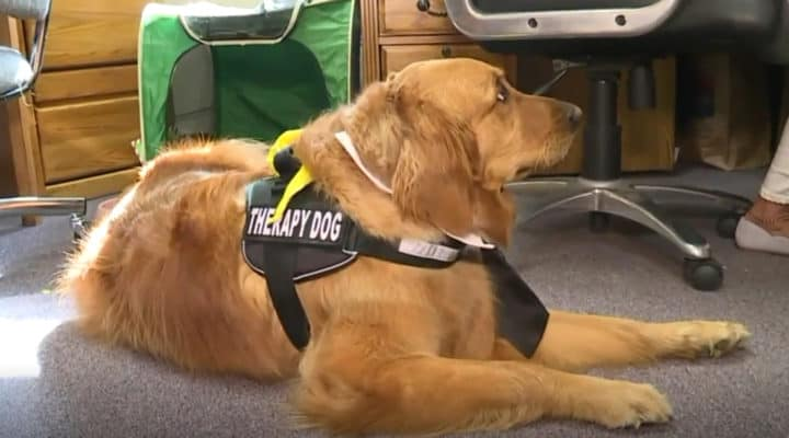therapy dog helps children in court