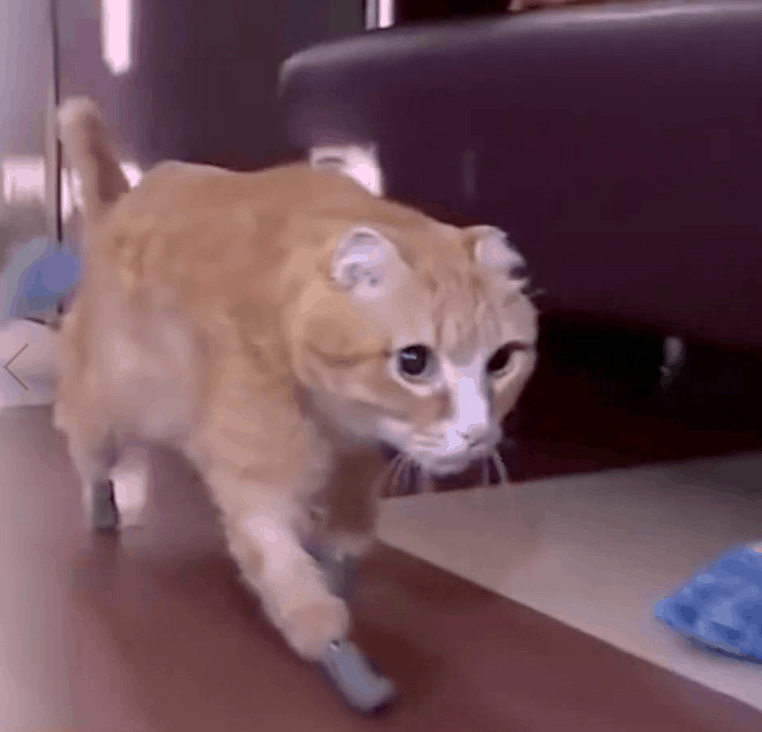 cat with bionic paws