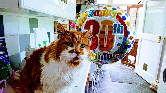 137 year old cat