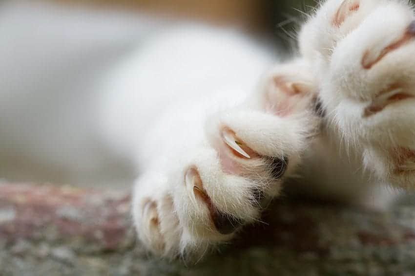 declawing banned
