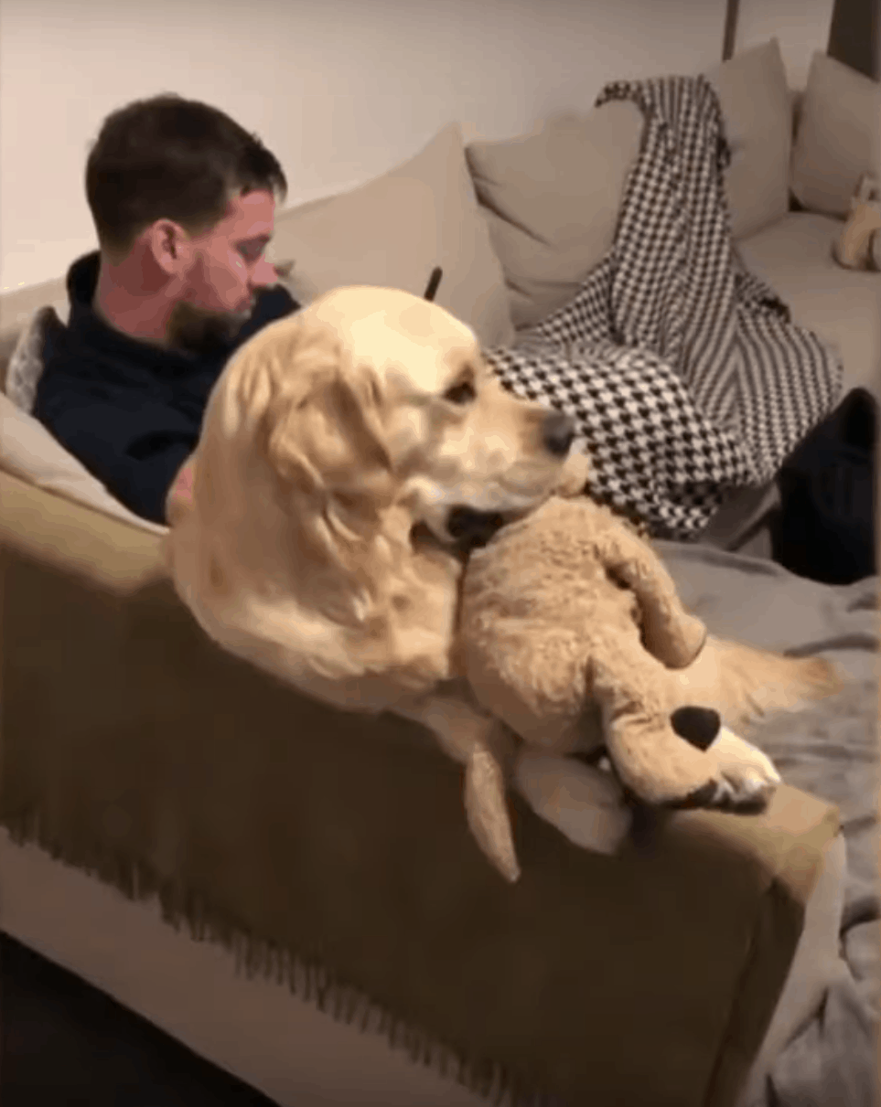 golden retriever toy