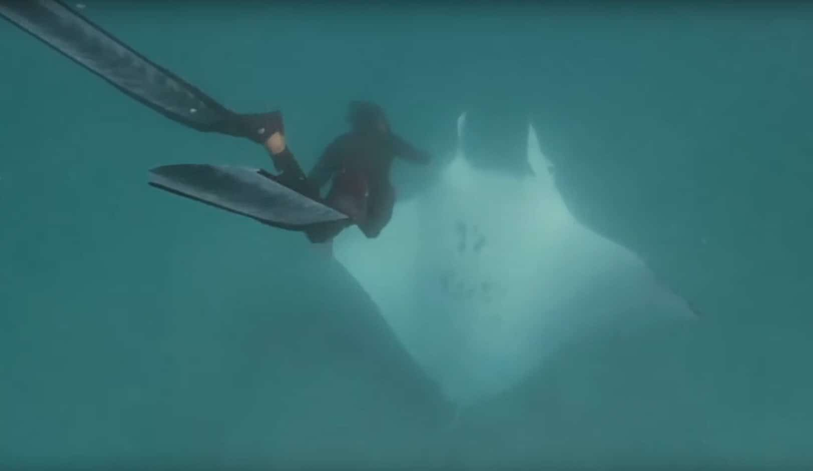 manta ray asks for help