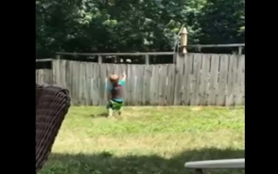 neighbor's dog plays fetch with toddler