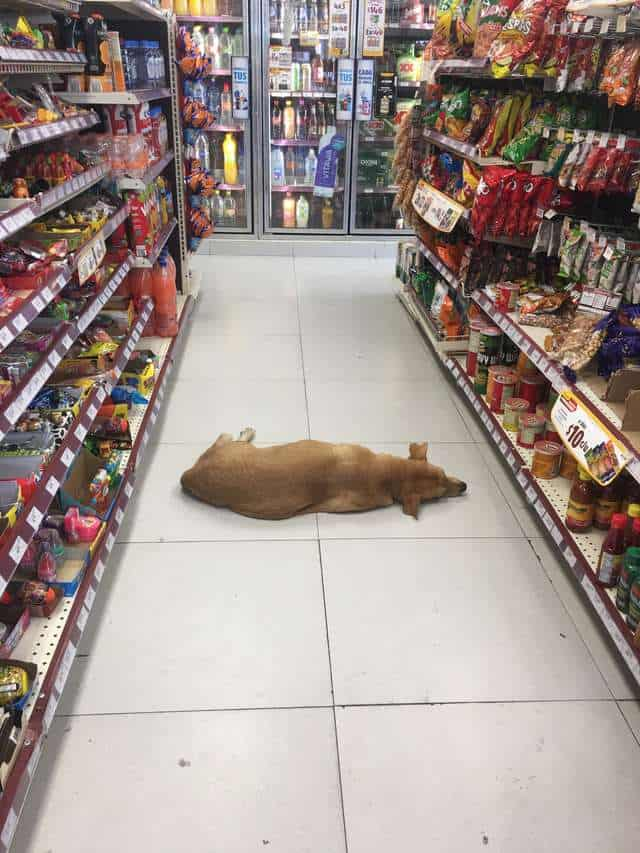 stray dog heatwave