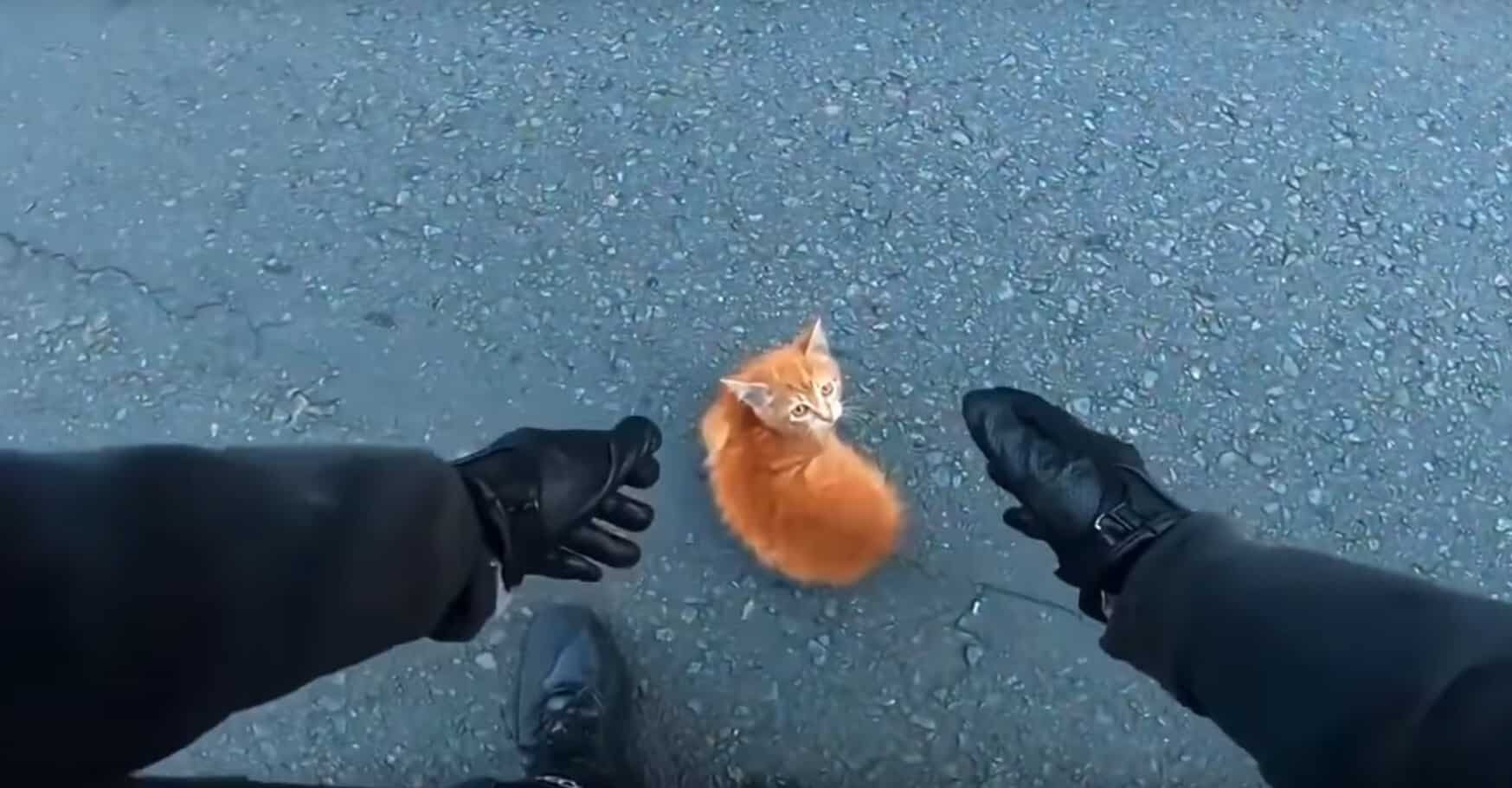 motorcyclist saves kitten