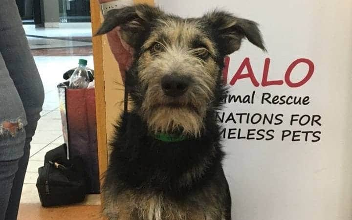 mutt rescued for disney movie