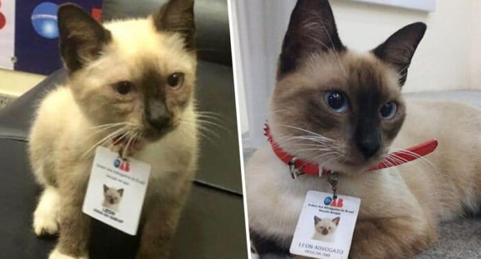 Employees Complained About Stray Cat Roaming Law Firm – So They Hired Him!