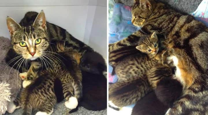 vet kittens cat mother